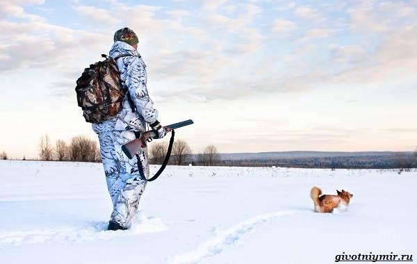 Охота-зимой-на-разных-зверей-и-её-особенности-4