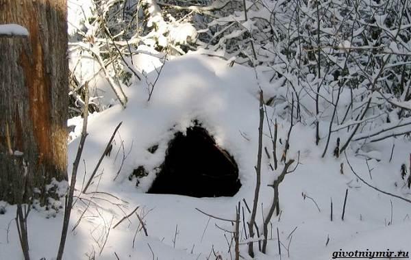 Охота-зимой-на-разных-зверей-и-её-особенности-6