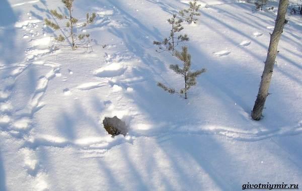 Охота-зимой-на-разных-зверей-и-её-особенности-7