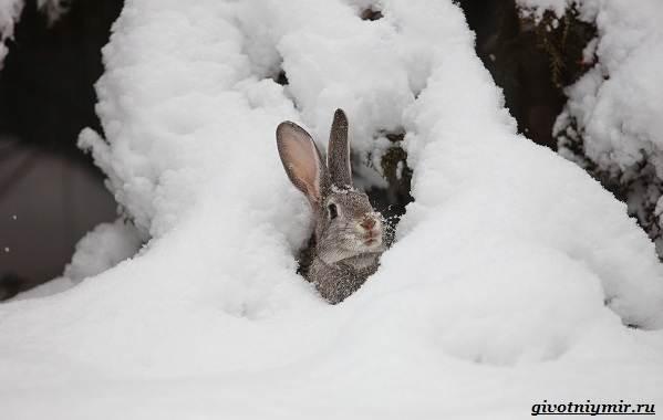 Охота-зимой-на-разных-зверей-и-её-особенности-9