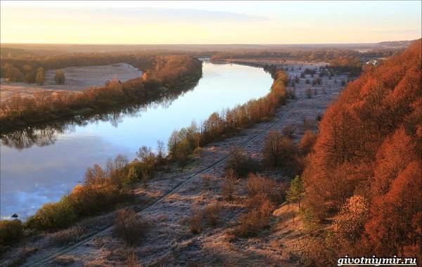 15-лучших-рыболовных-мест-в-Брянской-области-бесплатные-и-платные-1