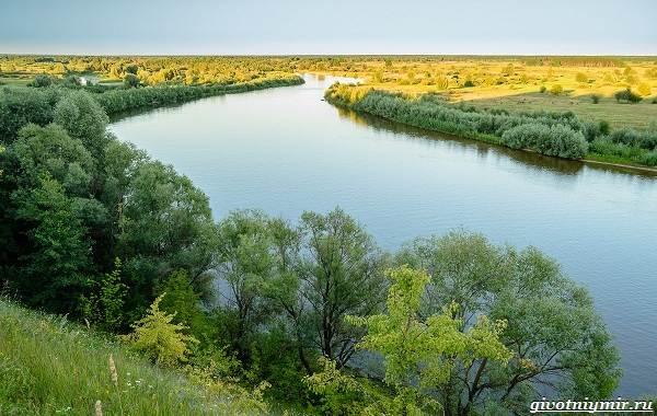15-лучших-рыболовных-мест-в-Брянской-области-бесплатные-и-платные-3