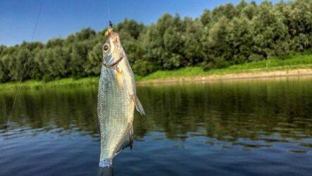 15 лучших рыболовных мест в Брянской области: бесплатные и платные