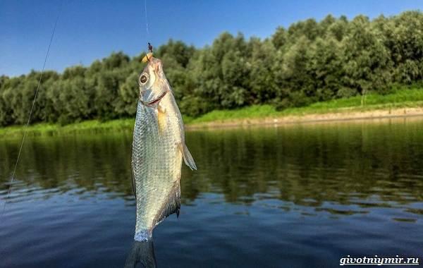 15-лучших-рыболовных-мест-в-Брянской-области-бесплатные-и-платные-4