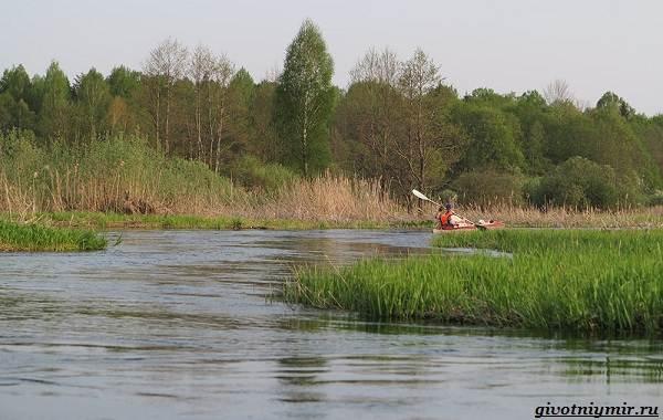 15-лучших-рыболовных-мест-в-Брянской-области-бесплатные-и-платные-5