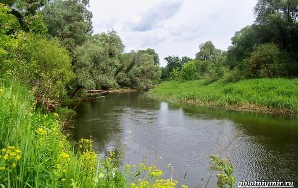 15-лучших-рыболовных-мест-в-Брянской-области-бесплатные-и-платные-7