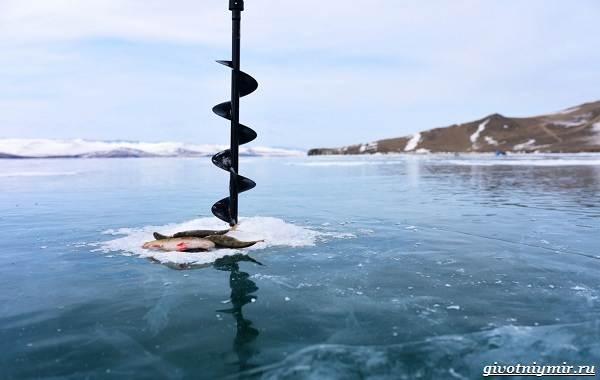 15-лучших-рыболовных-мест-в-Бурятии-Бесплатные-и-платные-1