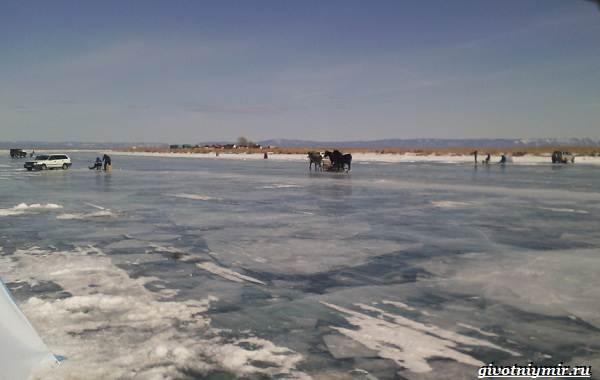 15-лучших-рыболовных-мест-в-Бурятии-Бесплатные-и-платные-12