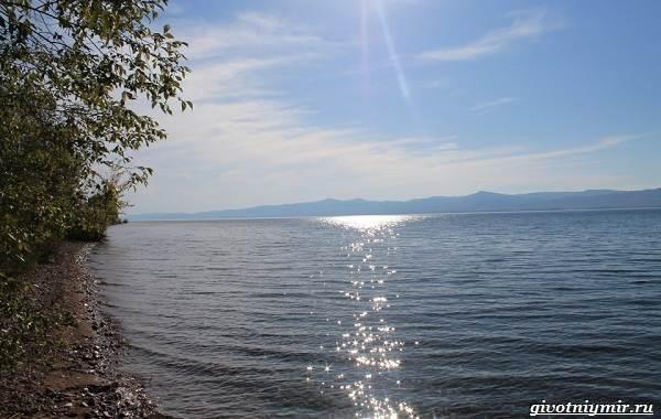 15-лучших-рыболовных-мест-в-Бурятии-Бесплатные-и-платные-4
