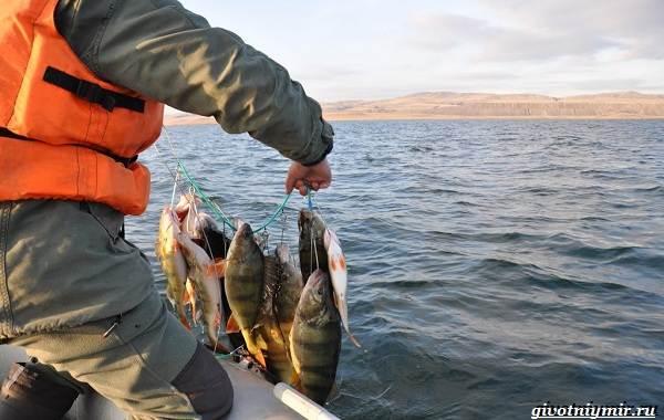 15-лучших-рыболовных-мест-в-Бурятии-Бесплатные-и-платные-7