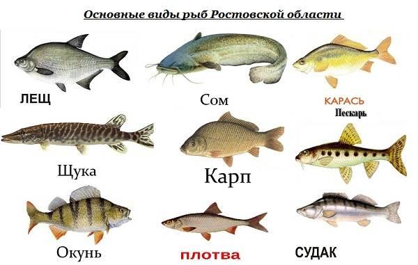 15-лучших-рыболовных-мест-в-Ростовской-области-Бесплатные-и-платные-1
