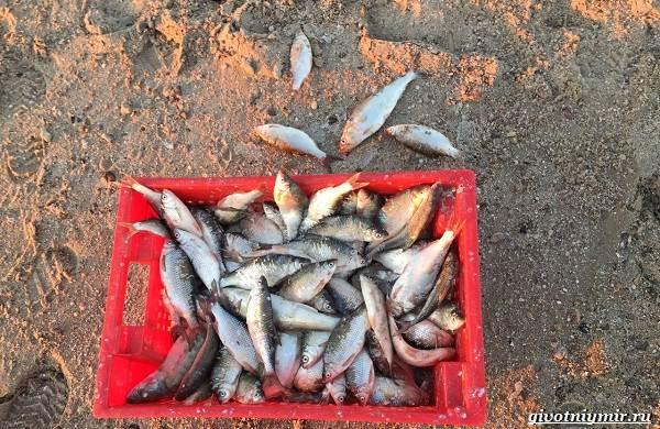 15-лучших-рыболовных-мест-в-Ростовской-области-Бесплатные-и-платные-10