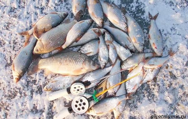 15-лучших-рыболовных-мест-в-Ростовской-области-Бесплатные-и-платные-11