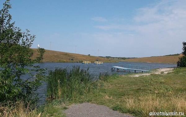 15-лучших-рыболовных-мест-в-Ростовской-области-Бесплатные-и-платные-15