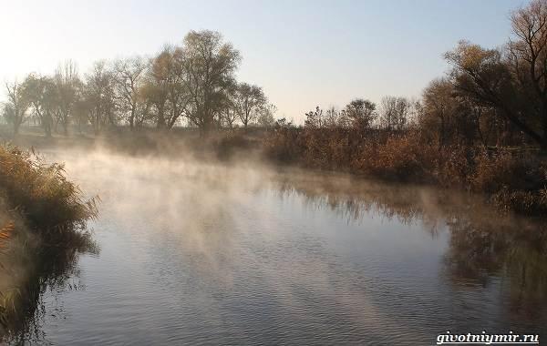 15-лучших-рыболовных-мест-в-Ростовской-области-Бесплатные-и-платные-6