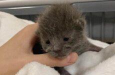 История о бездомном котёнке, который оказался кошечкой