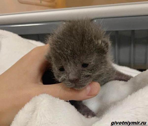 История-о-бездомном-котёнке-который-оказался-кошечкой-1