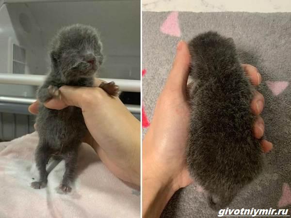 История-о-бездомном-котёнке-который-оказался-кошечкой-2