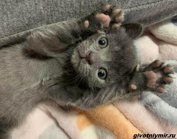 История-о-бездомном-котёнке-который-оказался-кошечкой-3
