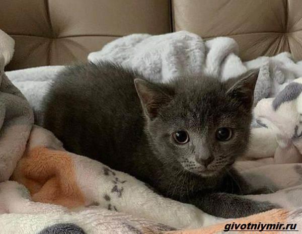 История-о-бездомном-котёнке-который-оказался-кошечкой-4