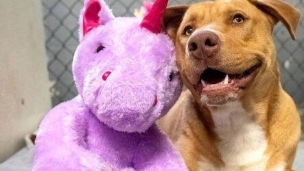 История о бездомной собаке, которая приходила в магазин ради плюшевого единорога