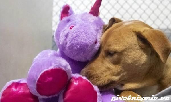 История-о-бездомной-собаке-которая-приходила-в-магазин-ради-плюшевого-единорога-4