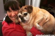 История о брошенной полненькой собаке, которая смогла похудеть