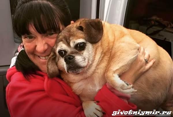 История-о-брошенной-полненькой-собаке-которая-смогла-похудеть-1