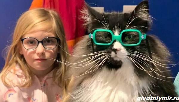 История-о-кошке-которая-вдохновляет-детей-с-плохим-зрением-носить-очки-1