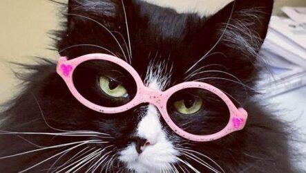 История о кошке, которая вдохновляет детей с плохим зрением носить очки