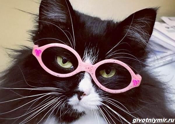 История-о-кошке-которая-вдохновляет-детей-с-плохим-зрением-носить-очки-2