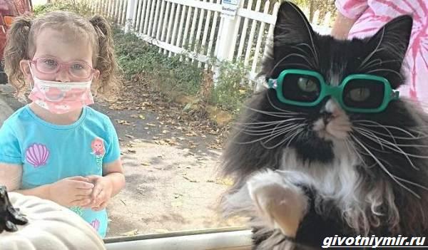 История-о-кошке-которая-вдохновляет-детей-с-плохим-зрением-носить-очки-3