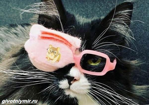 История-о-кошке-которая-вдохновляет-детей-с-плохим-зрением-носить-очки-4