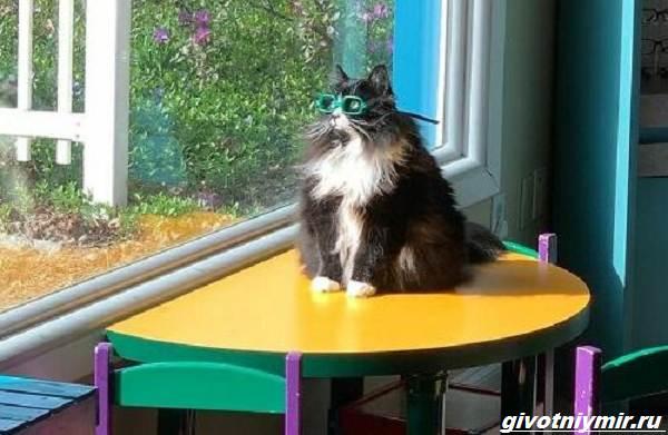История-о-кошке-которая-вдохновляет-детей-с-плохим-зрением-носить-очки-5