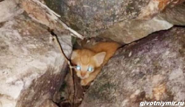 История-о-котёнке-который-просил-помощи-застряв-между-камнями-2