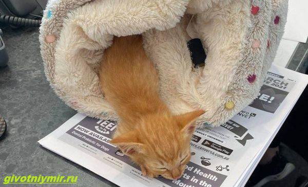 История-о-котёнке-который-просил-помощи-застряв-между-камнями-3