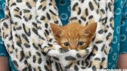 История о котёнке, который «просил» помощи, застряв между камнями