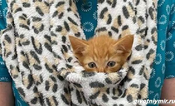 История-о-котёнке-который-просил-помощи-застряв-между-камнями-4