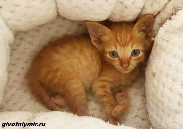 История-о-котёнке-который-просил-помощи-застряв-между-камнями-5