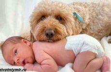 История о пушистой собаке, которая любит фотосессии с малышом