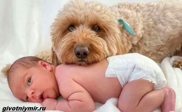 История-о-пушистой-собаке-которая-любит-фотосессии-с-малышом-1