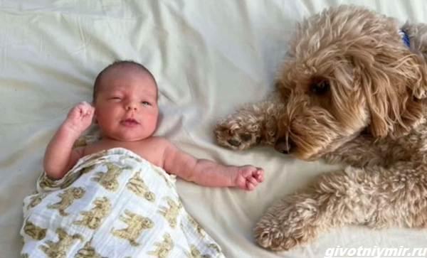 История-о-пушистой-собаке-которая-любит-фотосессии-с-малышом-2