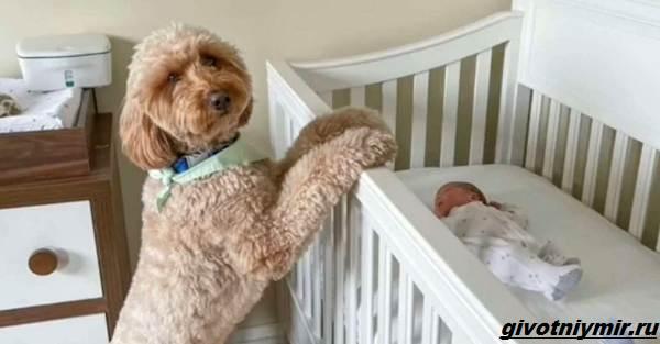 История-о-пушистой-собаке-которая-любит-фотосессии-с-малышом-4