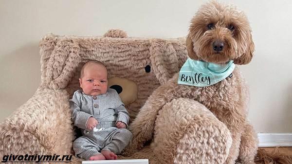 История-о-пушистой-собаке-которая-любит-фотосессии-с-малышом-5