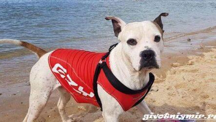 История о славном псе по кличке Макс, который спас тонущего мальчика