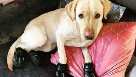 История о собаке, которая обожает ходить по дому в носочках