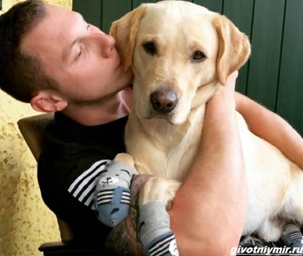 История-о-собаке-которая-обожает-ходить-по-дому-в-носочках-3