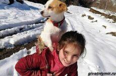 История о собаке, которую по снегу несла к ветеринару маленькая хозяйка