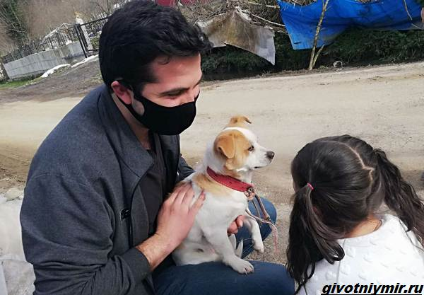 История-о-собаке-которую-по-снегу-несла-к-ветеринару-маленькая-хозяйка-3