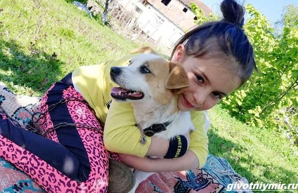 История-о-собаке-которую-по-снегу-несла-к-ветеринару-маленькая-хозяйка-4